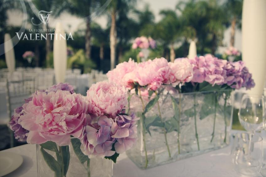 Foto hortensias moradas